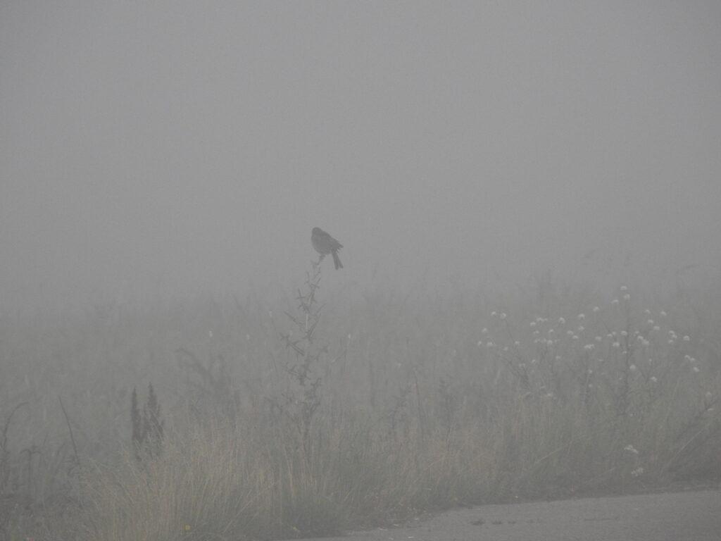 Ptasi Szlak, Park Narodowy Ujście Warty
