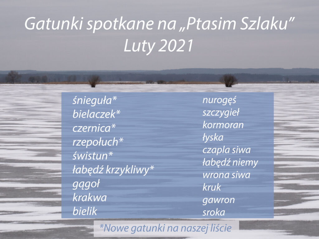 """Ścieżka edukacyjna """"Ptasim Szlakiem"""" - zimowe gatunki"""